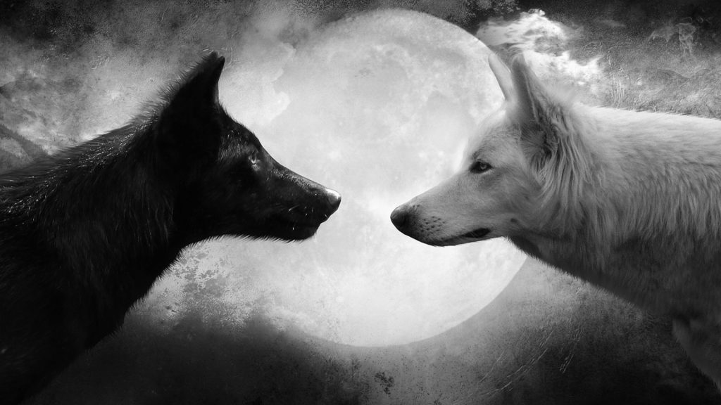 Black-and-White-Wolf-Pictures-HD-Wallpaper